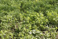 有园艺工具的资深妇女与手一起使用在她的在春天种植的庭院里在新近地被犁的土壤的庄稼期间 库存照片