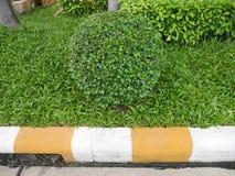 有圈子的切口装饰绿色小叶子使des环境美化 免版税图库摄影
