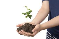 有土壤的年幼植物在手上 库存图片