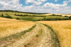 有土路的美丽的农村夏天乡下在领域之间 库存照片