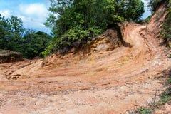 有土路的雨林 库存照片