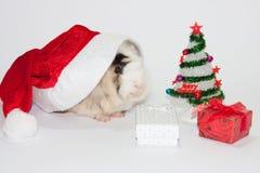 有圣诞树和试验品的圣诞老人帽子 免版税库存照片