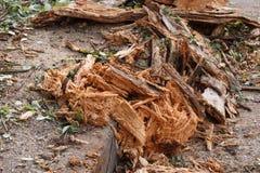 有在城市街道上停放的下落的树的损坏的汽车 库存照片