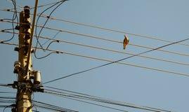 有在导线的一只鸟 免版税库存图片