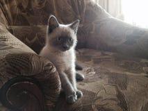 有在扶手椅子的一只猫 免版税库存图片