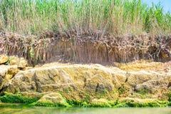 有在水反映的芦苇的河 库存图片