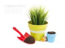 有在白色背景和绿色植物的园艺设备隔绝的植物 免版税库存图片