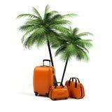 有在白色背景隔绝的棕榈树的手提箱 库存图片