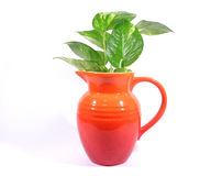 有在白色背景隔绝的绿色叶子的一个橙色水罐 免版税库存图片