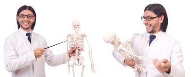 有在白色隔绝的骨骼的滑稽的老师 免版税库存图片