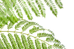 有在白色隔绝的绿色叶子的植物 库存图片