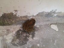 有在老住宅走廊的一只蟾蜍 免版税库存图片