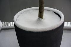 有在雪盖的树干的庭院罐 免版税图库摄影