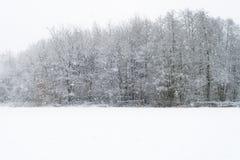 有在雪盖的树行的草甸在降雪期间 免版税图库摄影