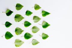 有地球的叶子 免版税库存照片