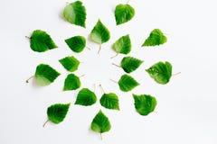 有地球的叶子 免版税图库摄影