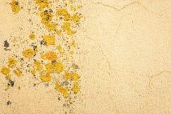 有地衣的老黄色墙壁 免版税库存照片