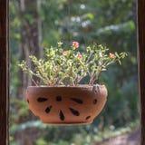 有垂悬在窗架的花的花瓶在热带庭院附近,海岛酸值张,泰国 库存照片