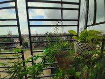 有垂悬的树的窗口庭院 免版税图库摄影