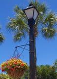 有垂悬的植物的煤气灯 库存图片