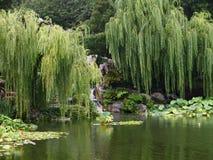 有垂柳&池塘的平静的偏僻的东方庭院 库存照片