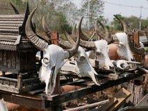 有垫铁的母牛和水牛头骨 免版税图库摄影