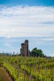 有城堡的葡萄园 图库摄影