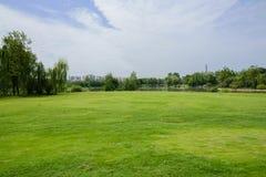 有城市的湖边草坪在背景中在多云夏天早晨 免版税库存照片