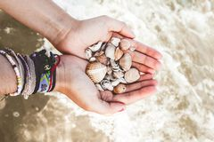 有壳的手在海 免版税图库摄影
