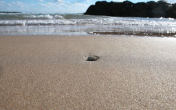 有壳水平宽的海滩海岸线 免版税库存图片