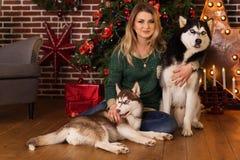有多壳的近的圣诞树两条狗的女孩  库存照片