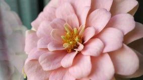 有多彩多姿的华美的花的桃红色,橘黄色庭院 库存照片