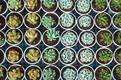 有多汁植物和仙人掌的罐在市场上 库存照片