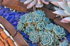 有多汁植物的沙漠庭院 免版税图库摄影
