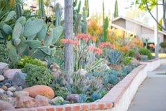 有多汁植物的沙漠庭院 库存图片