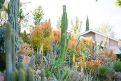 有多汁植物的沙漠庭院 免版税库存图片