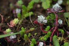 有多汁植物的Eco屋顶在庭院里 免版税库存图片