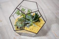 有多汁植物的Florarium玻璃花瓶 在a的微型仙人掌 免版税库存照片