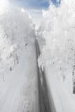 有多雪的树的冬天路 免版税库存图片
