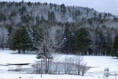有多雪的树的池塘 库存照片