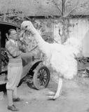 有大假驼鸟的人(所有人被描述不更长生存,并且庄园不存在 供应商保单那里将 免版税库存照片