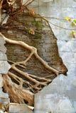 有大树根的废墟混凝土墙 库存照片