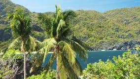 有大海的椰子后边在一个热带海岛上在菲律宾 股票视频