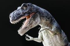 有大牙、狂放的眼睛和爪ro的剧烈Tyrranosaurus雷克斯 免版税库存照片