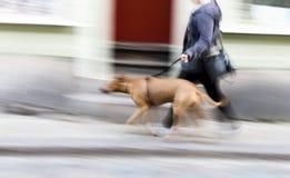 有大狗的少妇 免版税库存图片