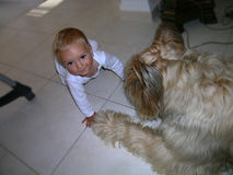 有大眼睛和大狗的一个男婴 免版税图库摄影