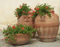 有大竺葵花的减速火箭的赤土陶器花瓶 免版税图库摄影