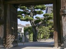 有大结构树的日本寺庙门 图库摄影