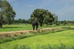 有大象的一个人 免版税库存照片