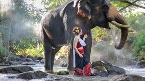 有大象的亚裔妇女在小河,泰国 股票录像